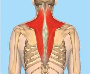 cervical myofascial pain diagram