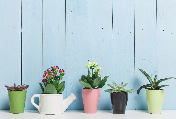 Succulents in various pots in front of a blue wall